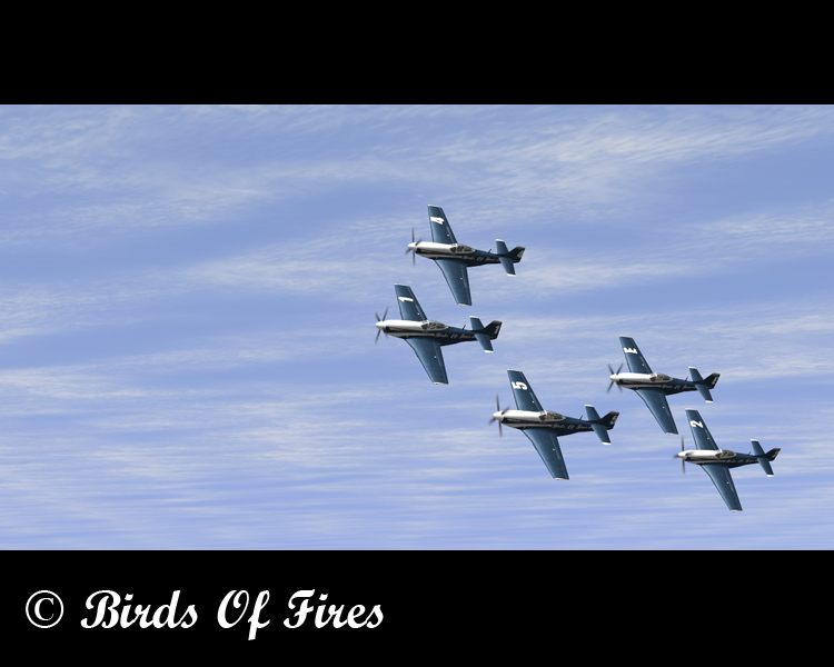 Birds Of Fire's Birdsoffires0005
