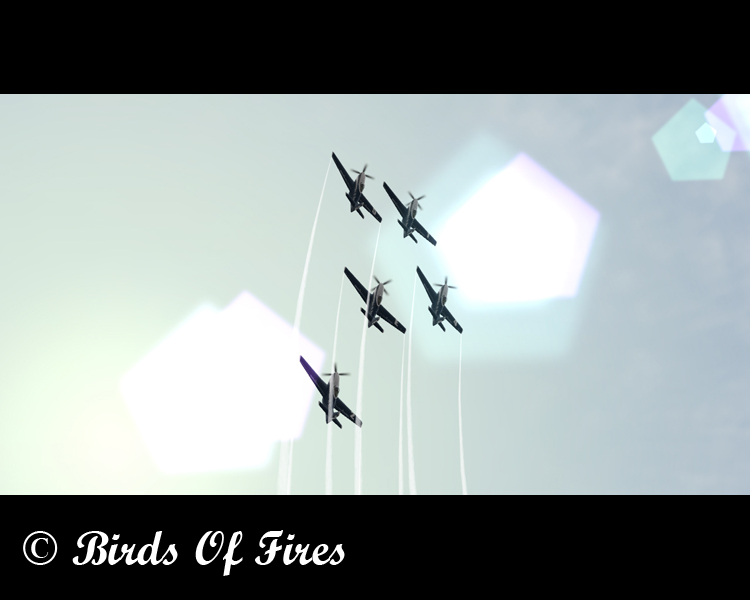 Birds Of Fire's Birdsoffires0051